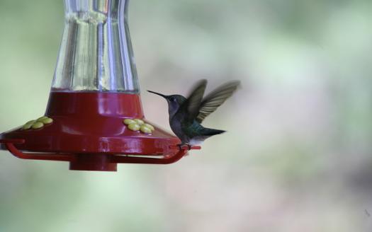 hummingbird-of-mountain-lake-by-tony-bursey